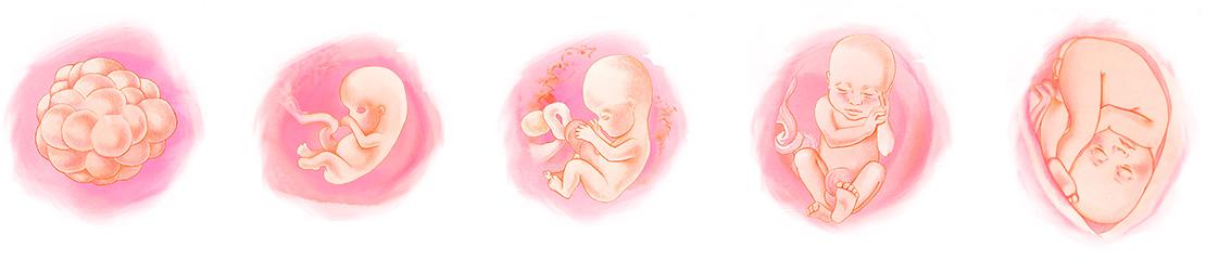 рограмма подготовки к зачатию