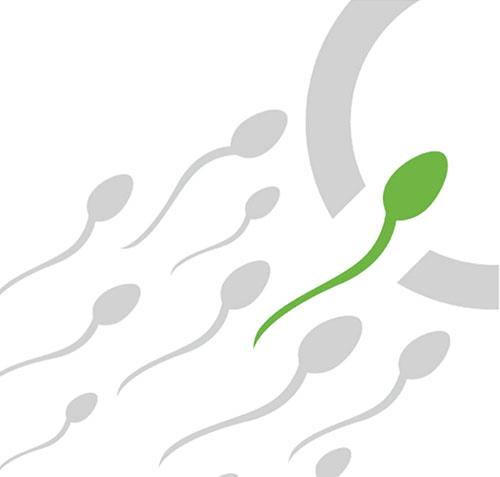расширенная спермограмма mar тест + морфология по Крюгер