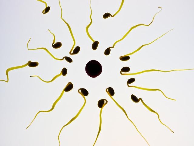 скорректировать показатели спермограммы