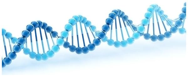 ФРАГМЕНТАЦИИ ДНК В СПЕРМАТОЗОИДАХ