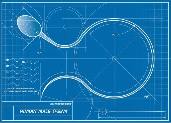 Фрагментация ДНК сперматозоида